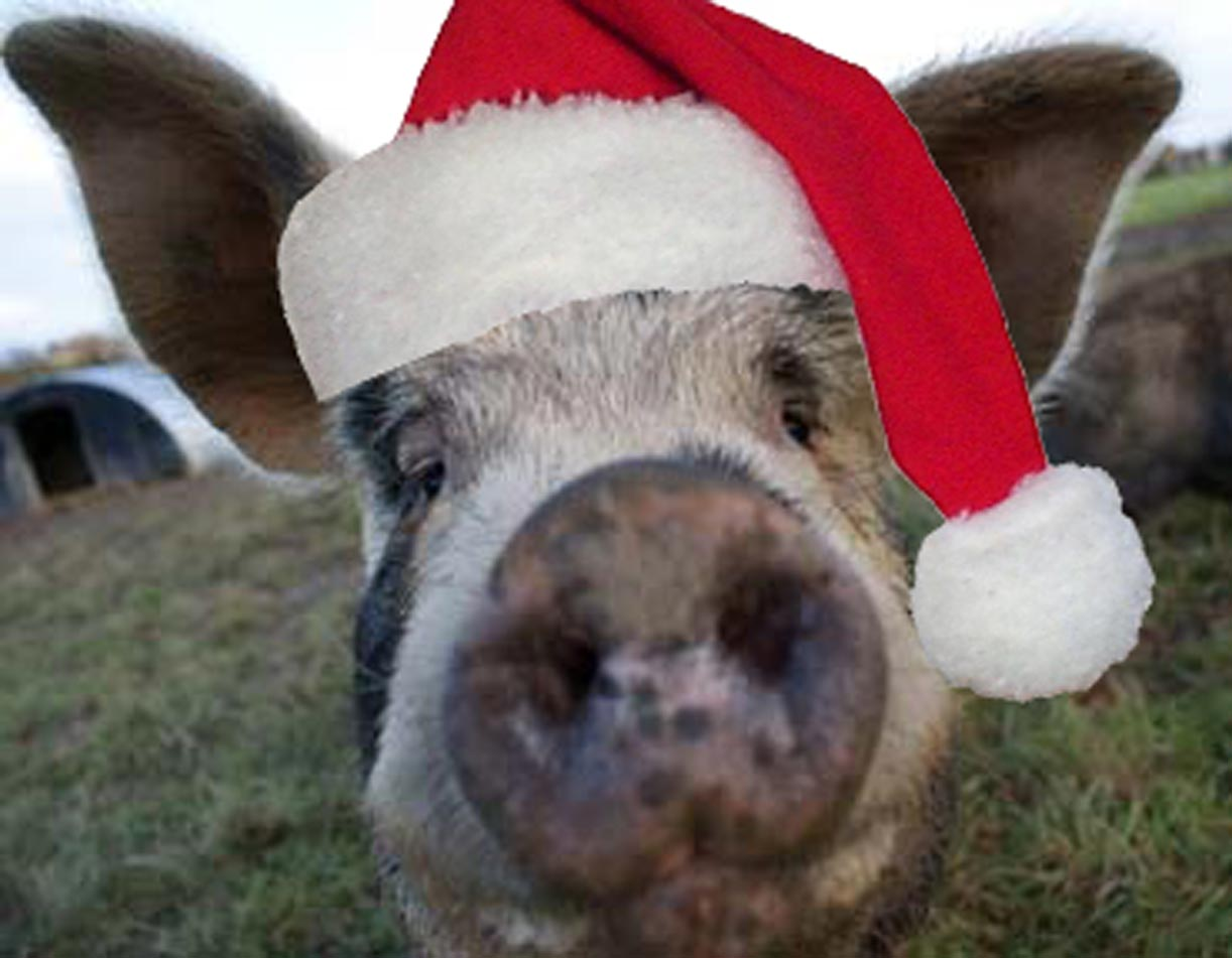 Picture of a pig with santa hat